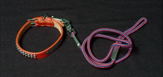 首輪とハーネス